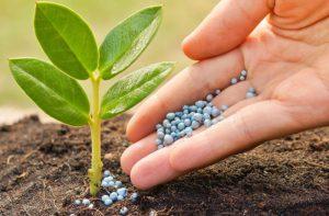 کود کشاورزی نیترات پتاسیم