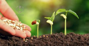 کود کشاورزی در مازندران
