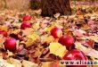 فروش انواع کود پاییزه