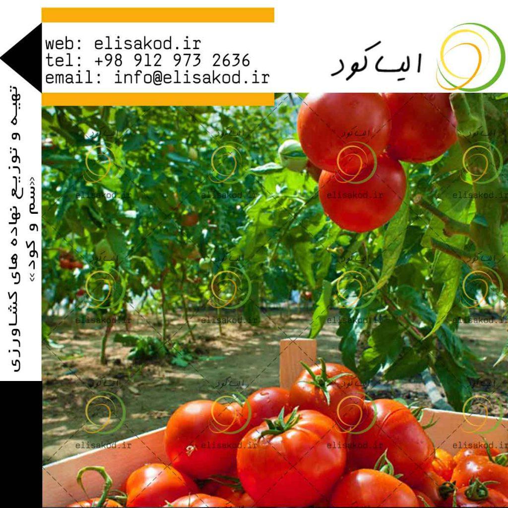 نیترات کلسیم گوجه